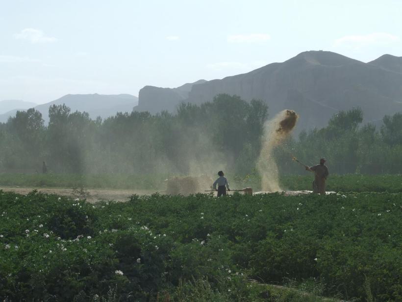 Afghanistan-Winnowing